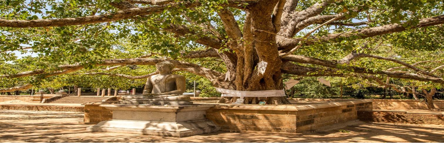 Anuradhapura boo tree-min